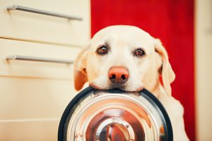 Dog holding food dish in mouth