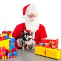 Holiday Gifts for Your Faithful Friends