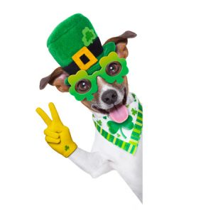 Dog dressed in St. Patrick's Day Attire