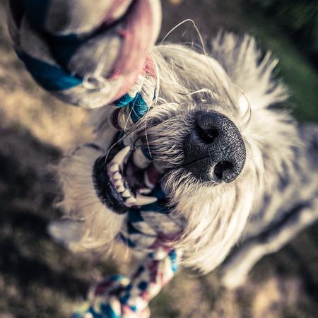 Elder Dog and Chew Toy