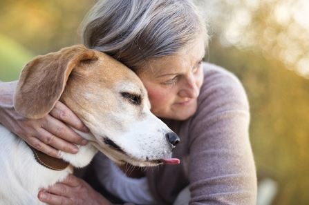 Retirement Homes for Dogs