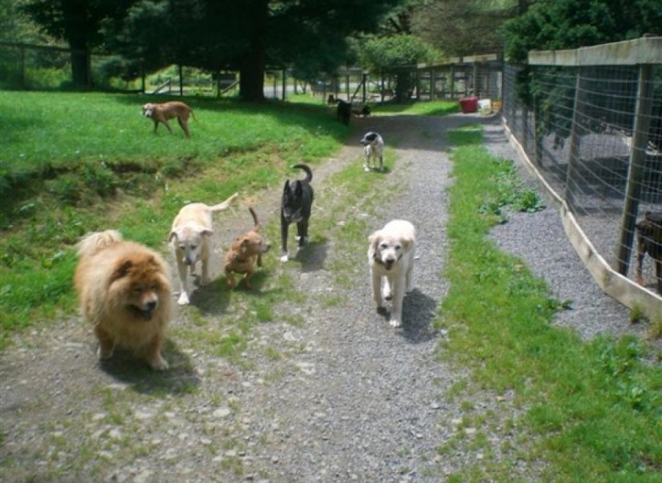 Dog Retirement Home & Long Term Pet Boarding | Silver Streak