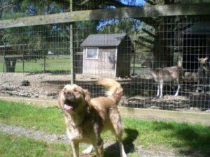 Long-Term Dog Boarding Farm in Upstate NY